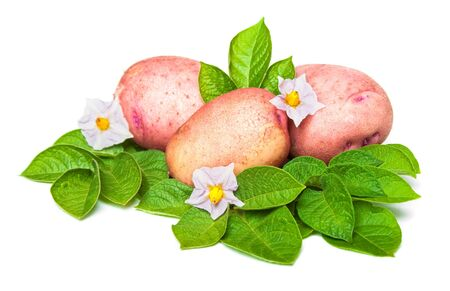new potato with leaves and flowers photo