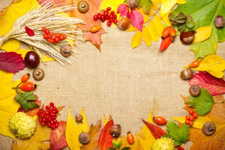 autumn elements frame - wheat, acorn, chestnut, viburnum, rowan, briar and multicolored leaves photo