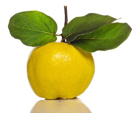 membrillo: membrillo con hoja verde aislado en blanco