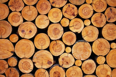 log on: wood logs background