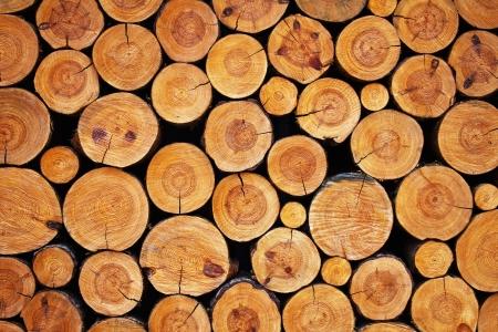 wood logs background Stock Photo - 12410752