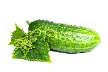 cucumber: cucubmer with leaf isolated on white