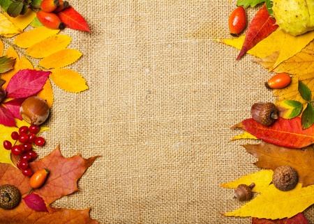 autumn elements border photo