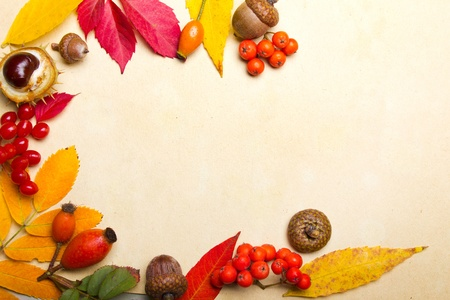 autumn elements background with copy-space photo