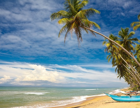 boat and coconut palm tree on tropical coast Stock Photo