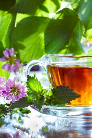 Herbal tea with mint photo