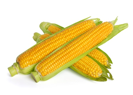 sweetcorn: Corn ear isolated on white