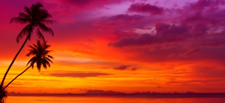 red sunset: Sunset over the ocean with tropical palm trees silhouette panorama