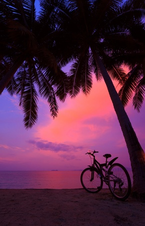 Tropical sunset with palm trees and bicycle on the beach, vertical panorama photo