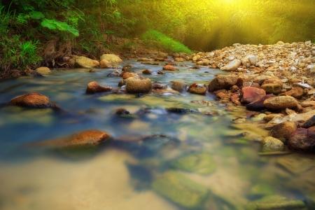 rio amazonas: Río tropical en la selva