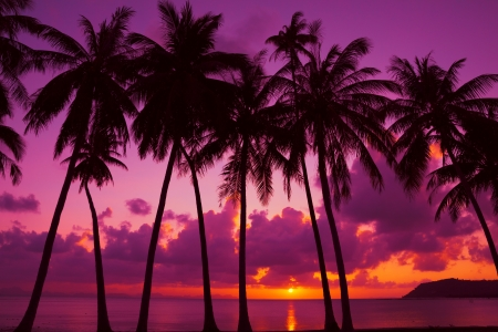 Palm trees silhouette at sunset on tropical island, Thailand photo