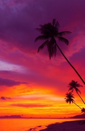 puesta de sol: Puesta de sol sobre el oc�ano con palmeras tropicales siluetas panorama vertical