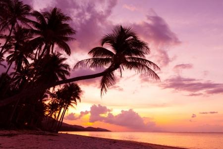 bounty: Hermosa puesta de sol tropical con palmeras en la playa silhoette
