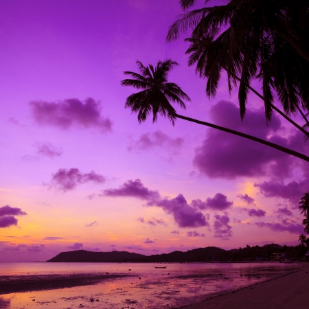 Tropical beach with palm trees at sunset, Thailand photo