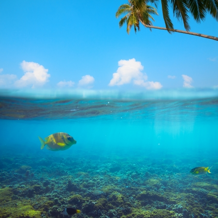 tropical fresh water fish: Tropical underwater shot splitted Stock Photo