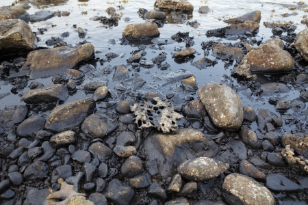 desechos toxicos: Derrame de petróleo en la orilla del mar Foto de archivo