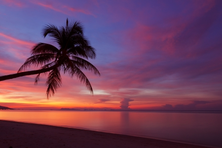 Tropical sunset with palm tree silhoette at beach photo