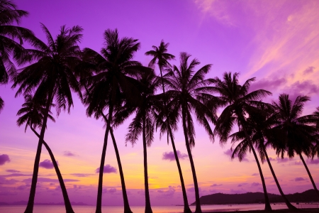 Tropical sunset over sea with palm trees, Thailand Stock fotó