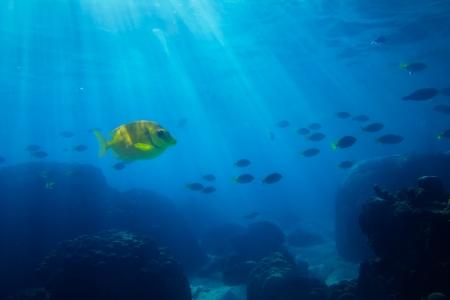 air bubbles: Tropical sea underwater shot Stock Photo