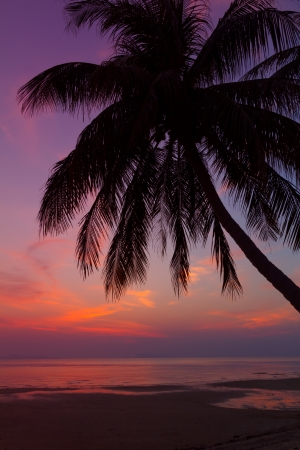 Tropical beach with palm tree at sunset, Thailand photo