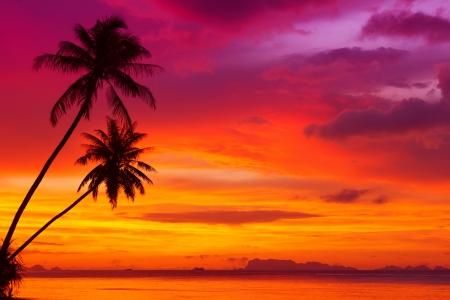 日没の熱帯のビーチで 2 ヤシの木シルエット 写真素材
