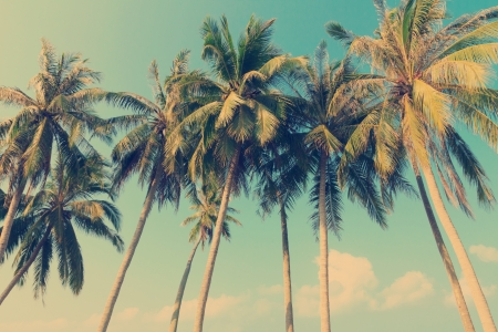 Vintage tropical palm trees Stock Photo
