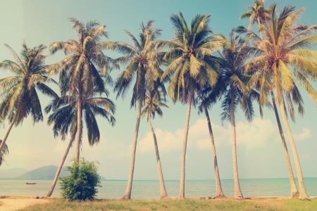 palmeras: Palmeras tropicales del vintage en una playa Foto de archivo