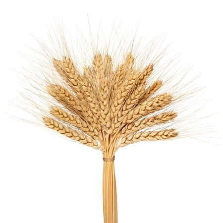 Wheat bunch isolated on white background photo