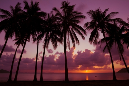 Palm trees on the beach at sunset light photo