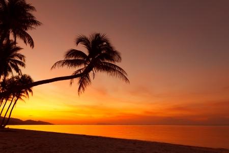 bounty: Puesta de sol tropical