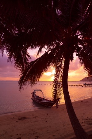 skiff: Small boat under the palm trees on tropical beach at sunset Stock Photo