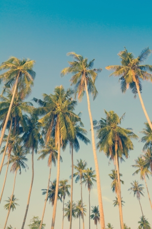 Vintage palm trees at tropical coast photo