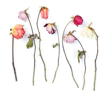 rose stem: Dry roses isolated on white Stock Photo