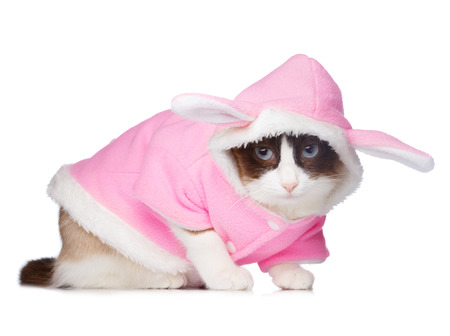 pink rabbit: Cat in pink rabbit costume isolated on white Stock Photo