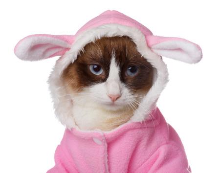 Kočka v růžovém kostýmu králíka na bílém