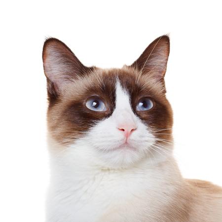 Cat portrait closeup photo