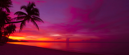 pink sunset: Tropical sunset with palm tree silhouette panorama