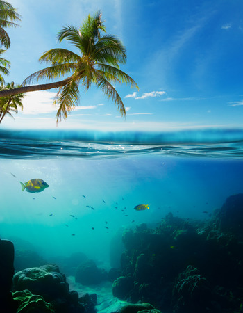 waterline: Tropical underwater shot splitted with surface, coconut tree and sky