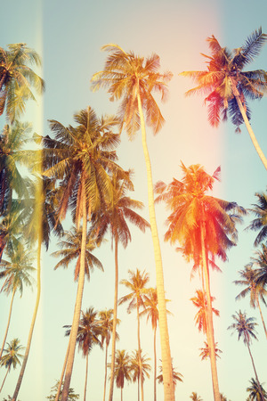 vertical: Palm trees at tropical coast, vintage toned and film stylized