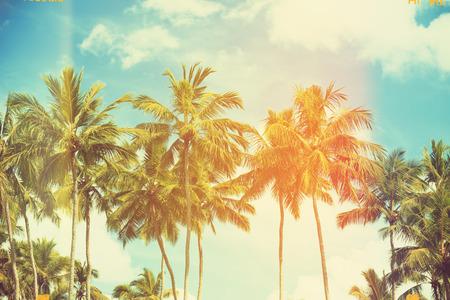 trees  summer: Palmeras en la costa tropical, vintage tonificado y cine estilizado Foto de archivo