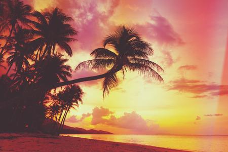Mooie tropische zonsondergang met palmbomen silhoette op het strand, retro gestileerde