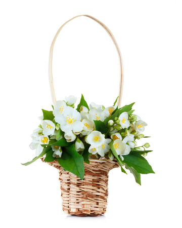 bouqet: Jasmine bouqet in basket isolated on white