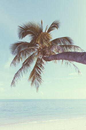 Vintage nostalgic stylized palm tree on tropical shore with blue sky and calm ocean