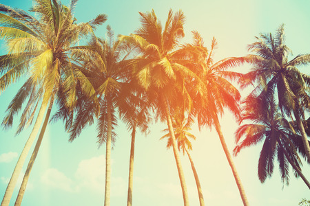 blue toned: Palm trees at tropical coast, vintage toned and stylized