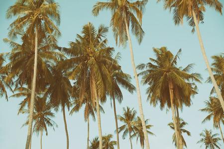 hojas de arbol: Palmeras en la costa tropical, vintage tonificado