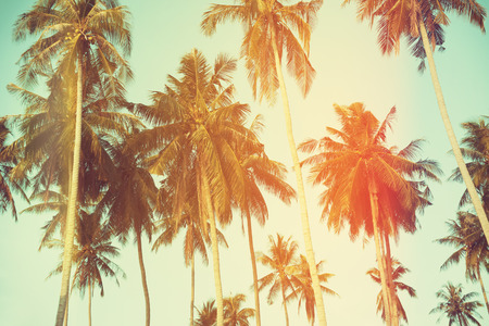 blue toned: Palm trees at tropical coast, vintage toned and film stylized