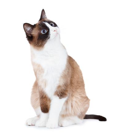 Verrast kat die recht hoek, geïsoleerd op wit Stockfoto