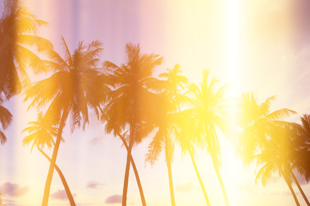 Palm trees on tropical shore at sunset, stylized with film burn light leaks