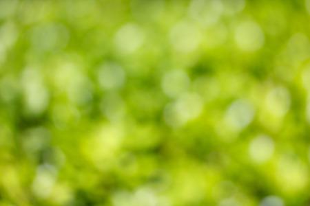 natual: Green and yellow natual bokeh background