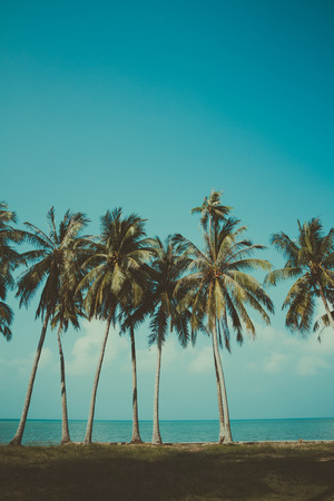 Vintage stylized palm trees on summer tropical shore Stock fotó